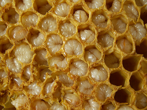продукты пчеловодства для похудения